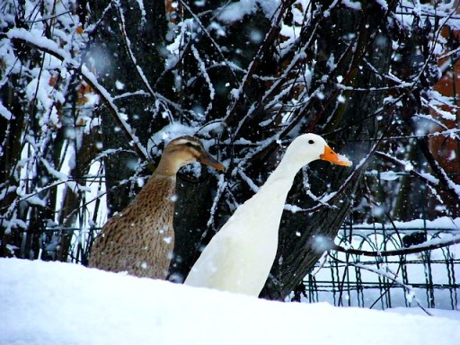 Sneeuw_03_2