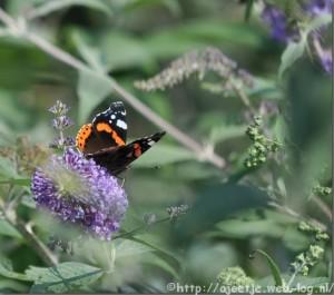 Vlinderen1102